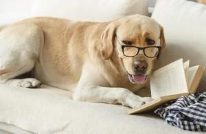 dog-reading-book-web